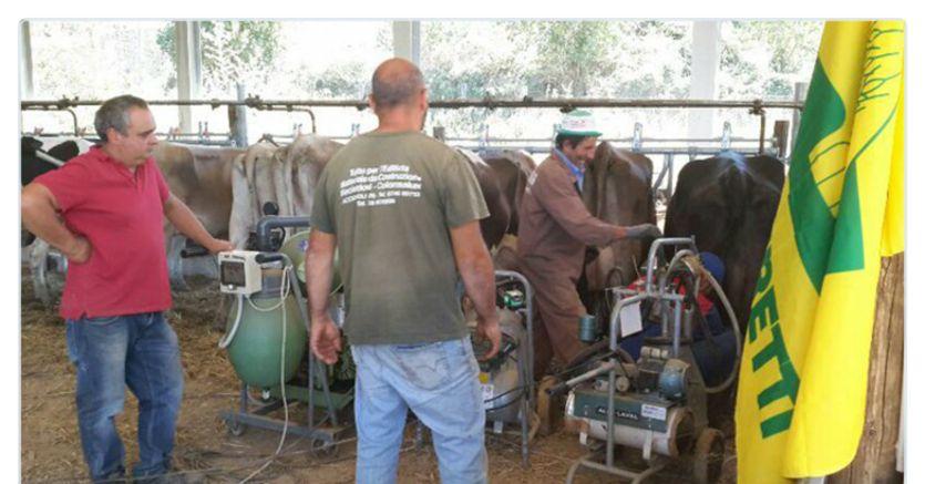 Terremoto, allevatori Abruzzo a Montecitorio con pecore sopravvissute